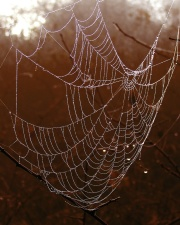 spiderweb, thread, trap, web, wet