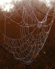 edderkoppspinn, tråd, trap, web, våt