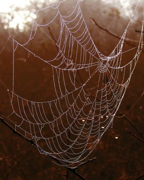 spiderweb, thread, trap, web, wet