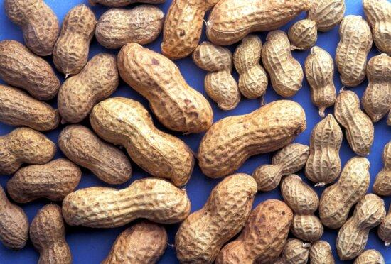 peanuts, shells