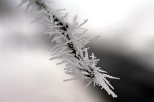 pin, neige, flocons de neige, temps, hiver