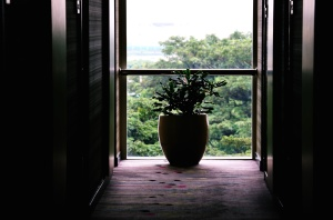 trees, vase, window, balcony, building