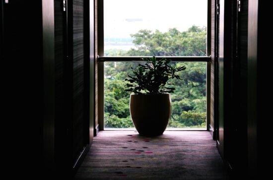 trees, vase, window, balcony, building