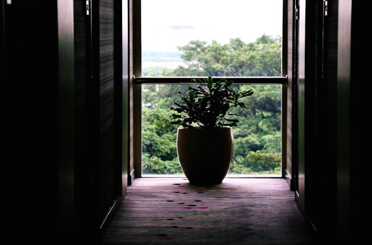 Bäume, Vase, Fenster, Balkon, Gebäude