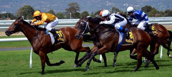 horse racing, contestants, race