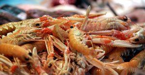 shrimp, fresh food