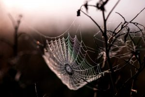 spider, web, morning dew, dawn