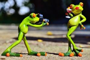 figurky, žáby, vtipné fotografie