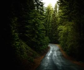 Fluss, Wald, Straße, Bäume