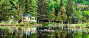trees, water, woods, panoramic, reflection