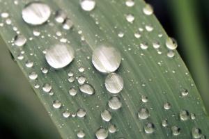 завод, дождь, капли воды, мокрый