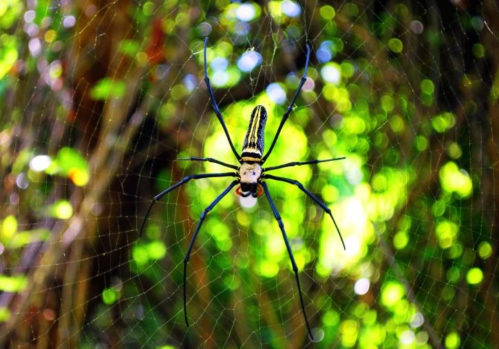 паяжина, капана, дървета, уеб, дивата природа, гора