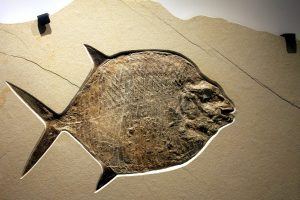 moonfish, fossil, fossil rock