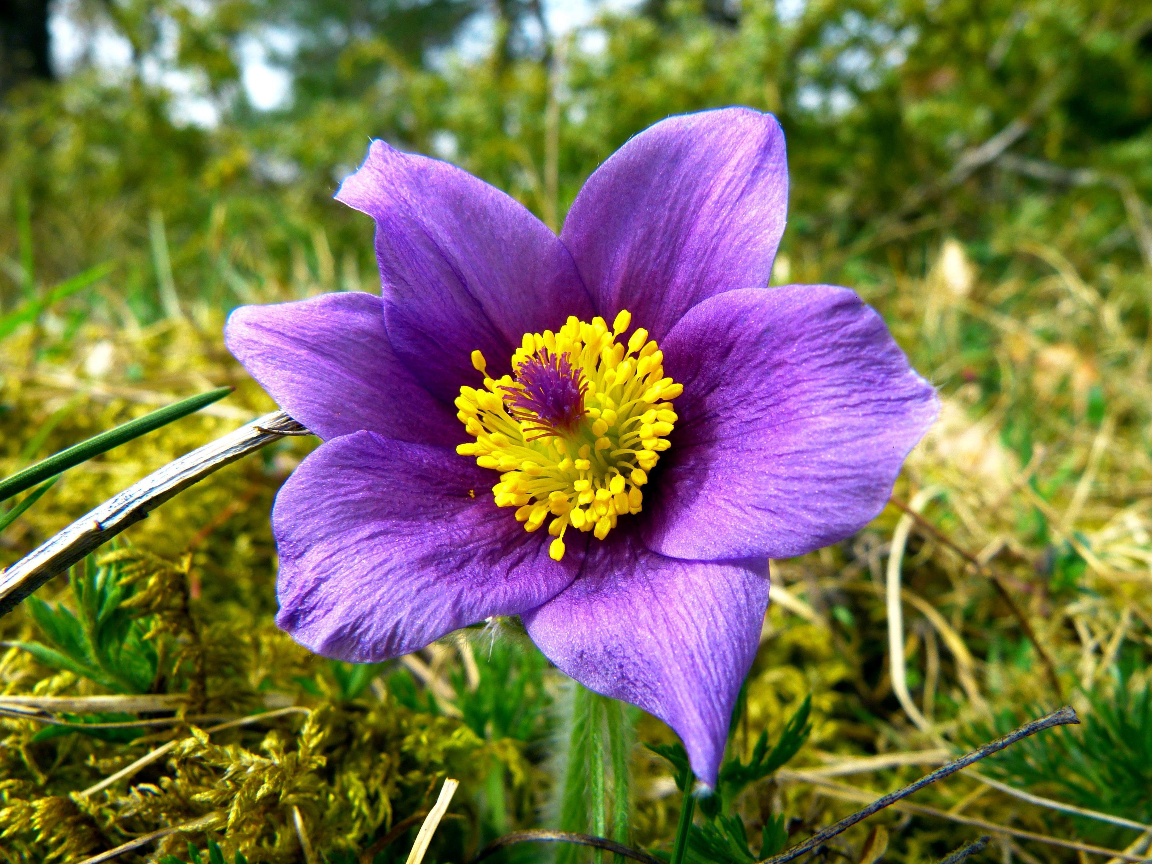Красивые картинки дикие растения