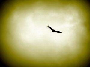 hawk flying, smoke, sky