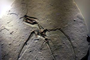 fossil Felsen, Steinzeit