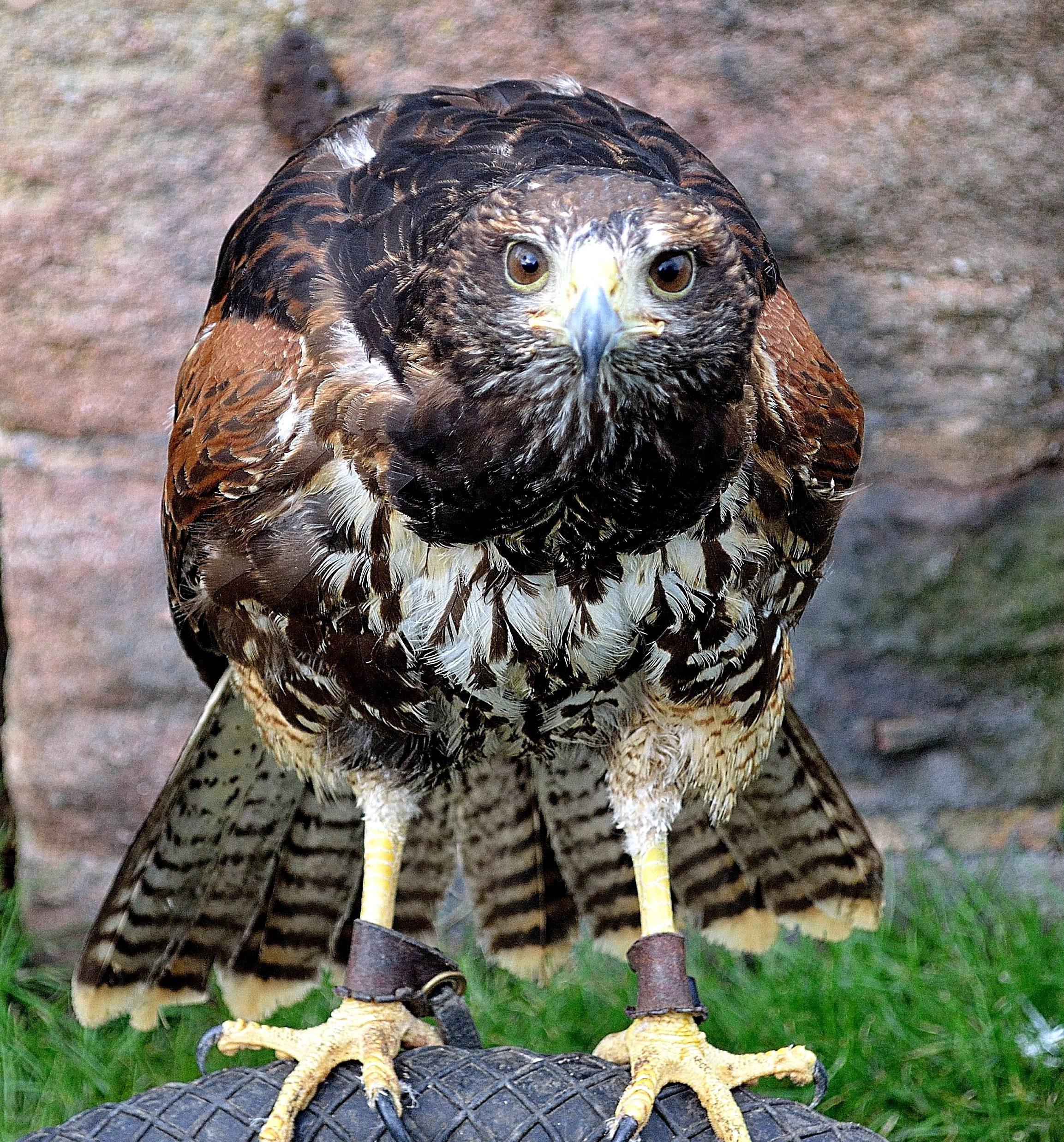 Falken Bilder