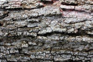 l'écorce des arbres, texture