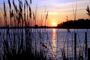 ηλιοβασίλεμα, τοπίο, φυτά Ριντ