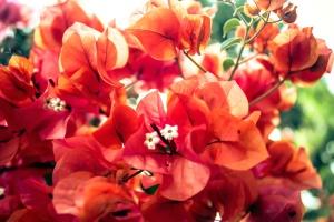 beautiful flower, blooming, bouquet, flora, flowers