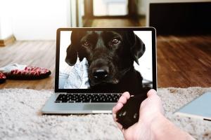 állatot, kutyát, kedvtelésből tartott, számítógépes képernyőn