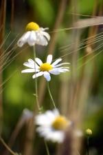 beautiful, bloom, blooming, environment, field, flora