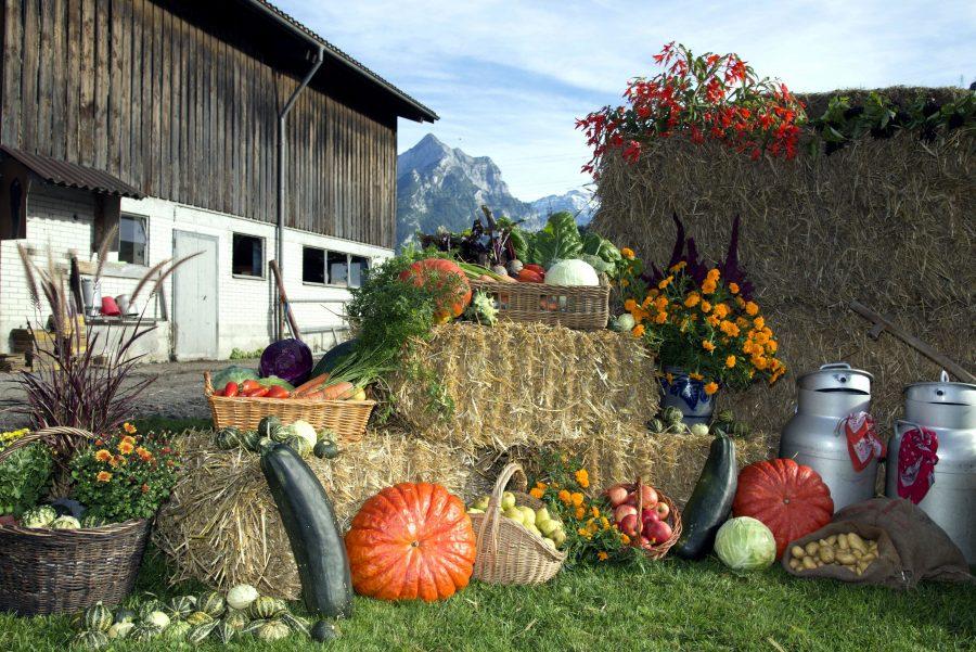 Giorno del Ringraziamento, il raccolto, autunno