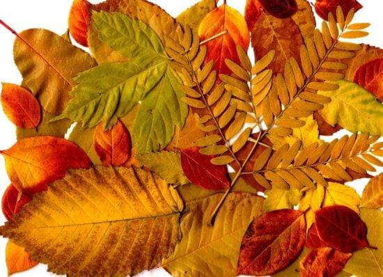 Φύλλα φυτών