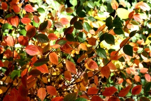 colorful leaves, autumn, leaves, texture