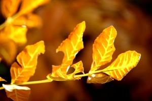 sprig leaf, brown, yellow, autumn, leaves