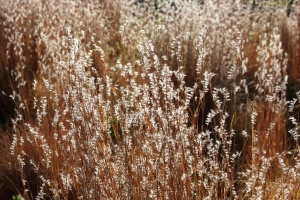 sunlight, autumn, meadow, grass, close up