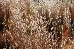 sunlight, autumn, meadow, grass, close up