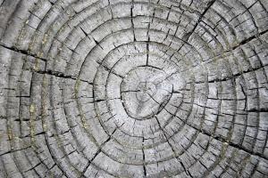 tree rings, weathered stump, texture, wood