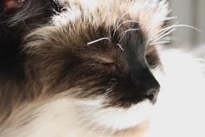 cat, eyes closed, basking, sunbeam, close up