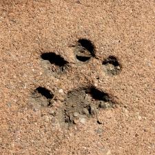 impresión de la pata, cemento