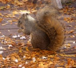 squirrel, eating, popcorn