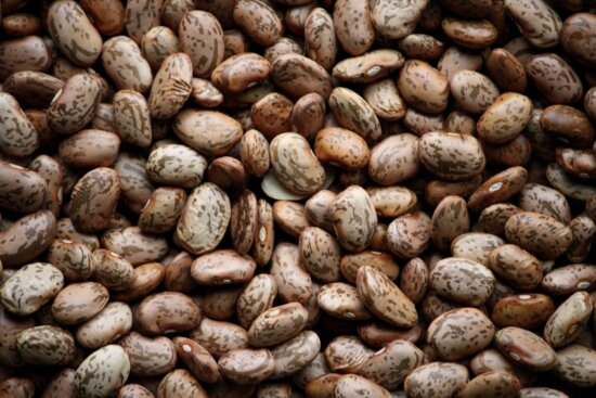 pinto beans, seed
