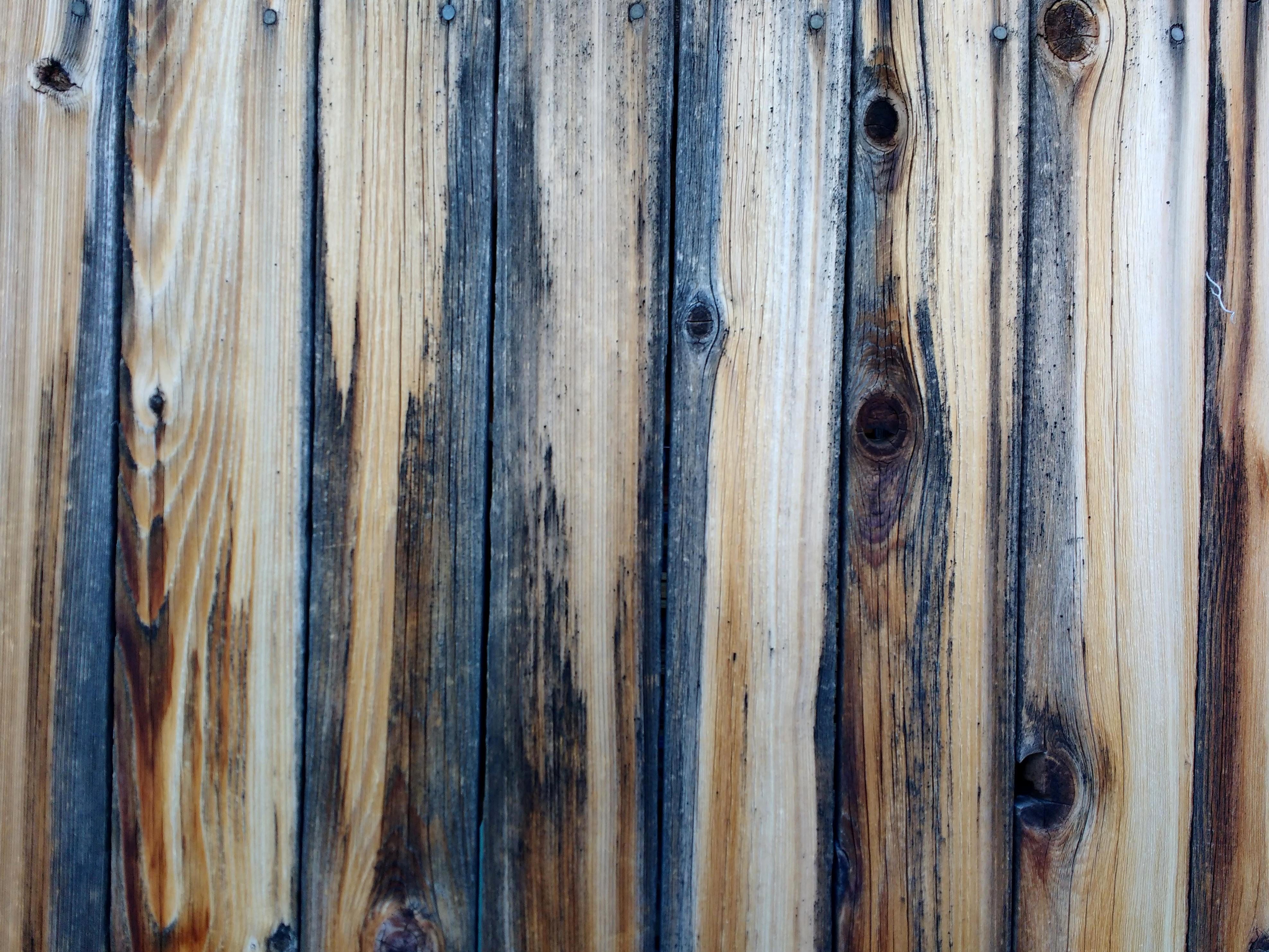 Free Picture Weathered Wooden Fence Board Texture