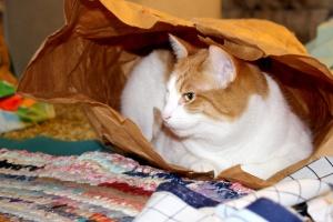 cat, paper bag