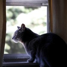 gato, mirar, ventana