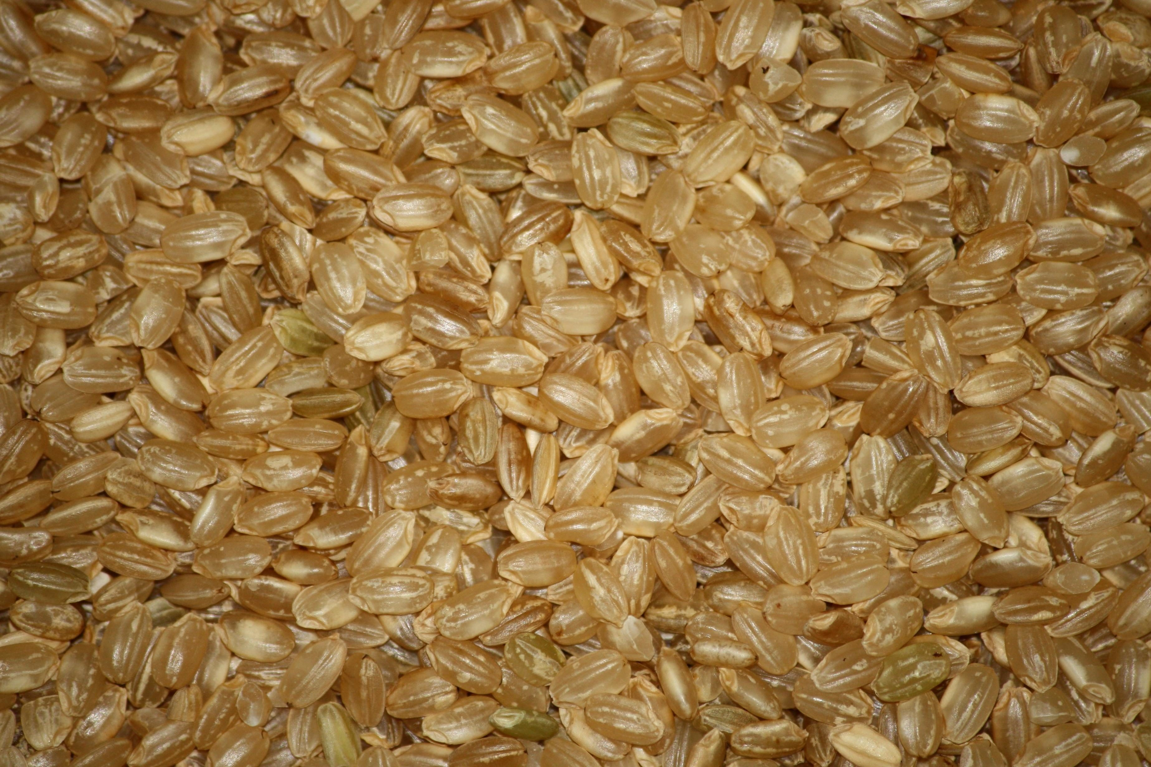 Free Picture Short Grain Brown Rice Seed