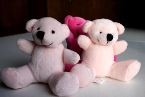 gấu teddy màu hồng