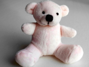 white teddy bear, toy