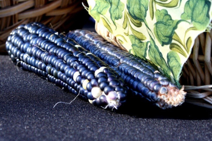 blue corn seed, corn, kernel, agriculture