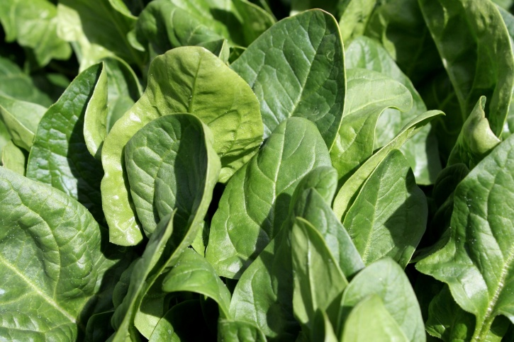 spinach, vegetable, leaves