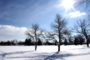Sunny day, Sunshine, winter, snow
