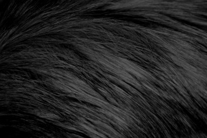 long haired, black, cat fur, texture