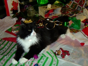 domestic cat, Christmas, decoration, ribbons
