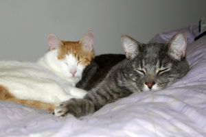 cuddling cats, pet, domestic kittens