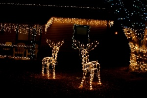 house, night, Christmas night, icicle, reindeer, lights